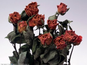 Не дарите мертвые цветы