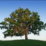 Деревья – помощники родноверу!
