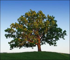 Дерево - помощник родноверу!