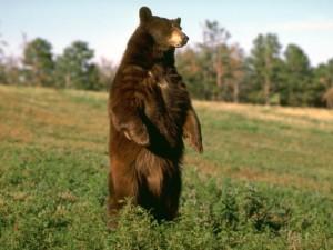 Животные в славянской культуре, тотемы славян