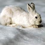Заяц в славянской культуре