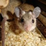 Мышь в славянской мифологии
