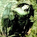 Птица Могол
