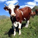 Корова в Славянской Мифологии