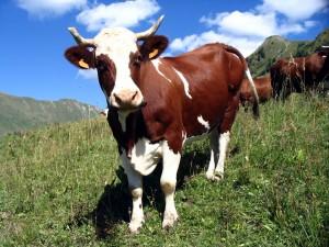 Корова, животные в славянской культуре, тотемы славян