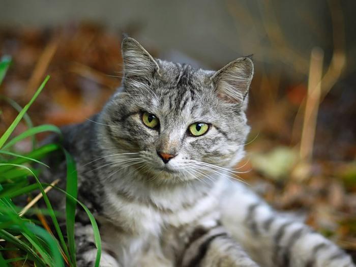 Славянские тотемы, кошка, животные в русской традиции