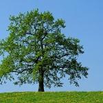 Деревья в родной культуре