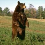 Медведь в Славянской культуре