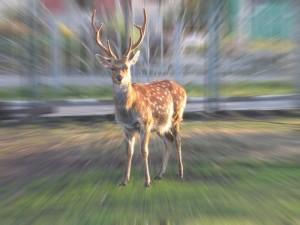 Животные в славянской мифологии, олень в русских сказках,