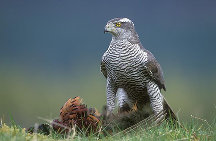 Птицы в славянской мифологии, животные в русском эпосе